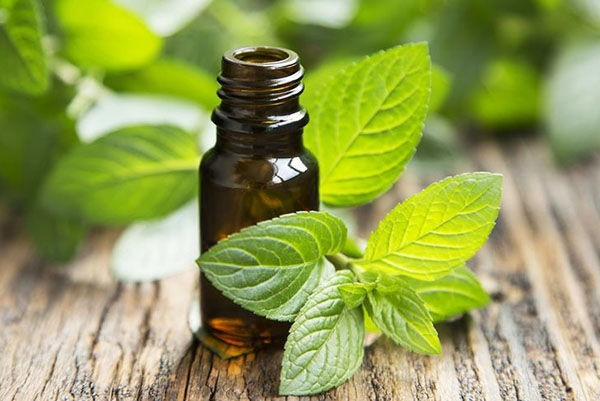 production-of-unrefined-mint-oil