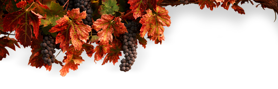 Wine-making sector